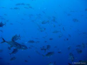 Maldive sommerse