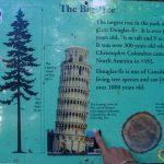 La Torre di Pisa Ovunque
