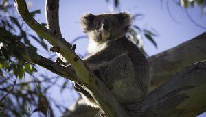 """Naturalmente"" Kangaroo Island"
