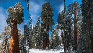 Sequoia National Park – Tappa 4 – Ovest USA
