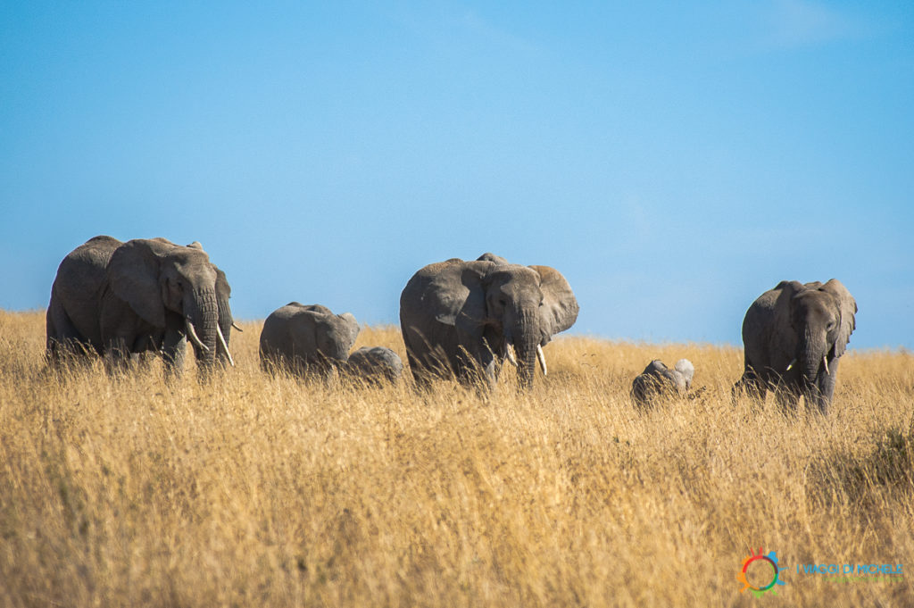 Elefanti nel Serengeti - Tanzania