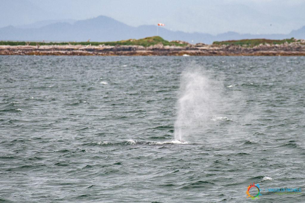 Uno sbuffo di balena nelle vicinanze