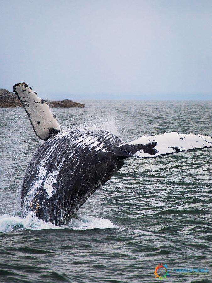 Il ventre della balena durante un tuffo incredibile