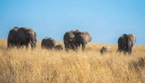 Safari nel Serengeti – Tanzania