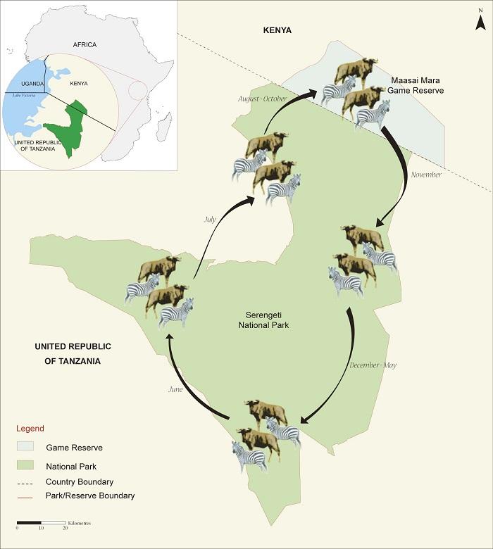 Serengeti Migrazioni