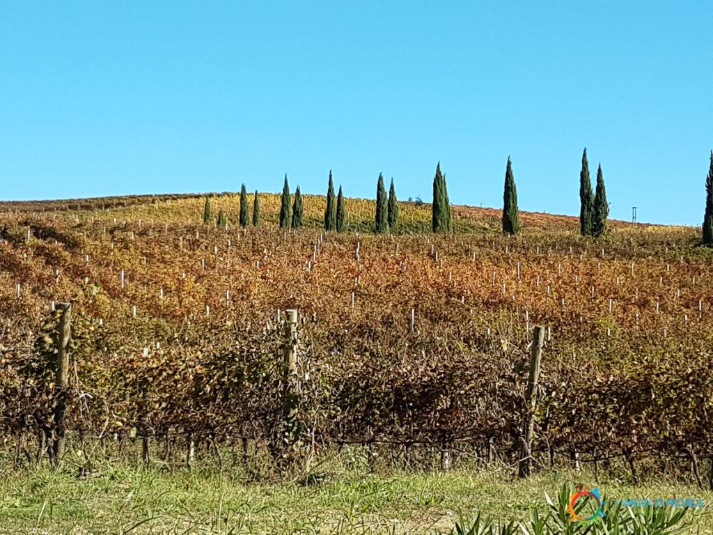 Le vigne nelle Colline Pescaresi