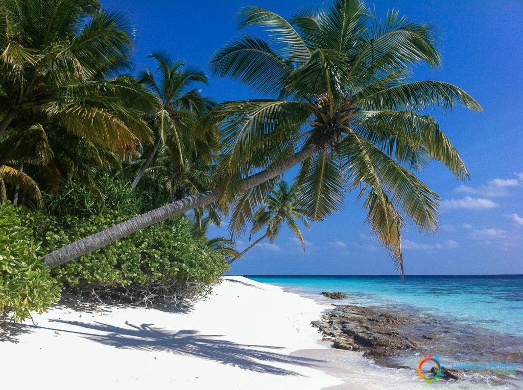 Maldive - Ribudhoo Island - Dhaalu Atoll
