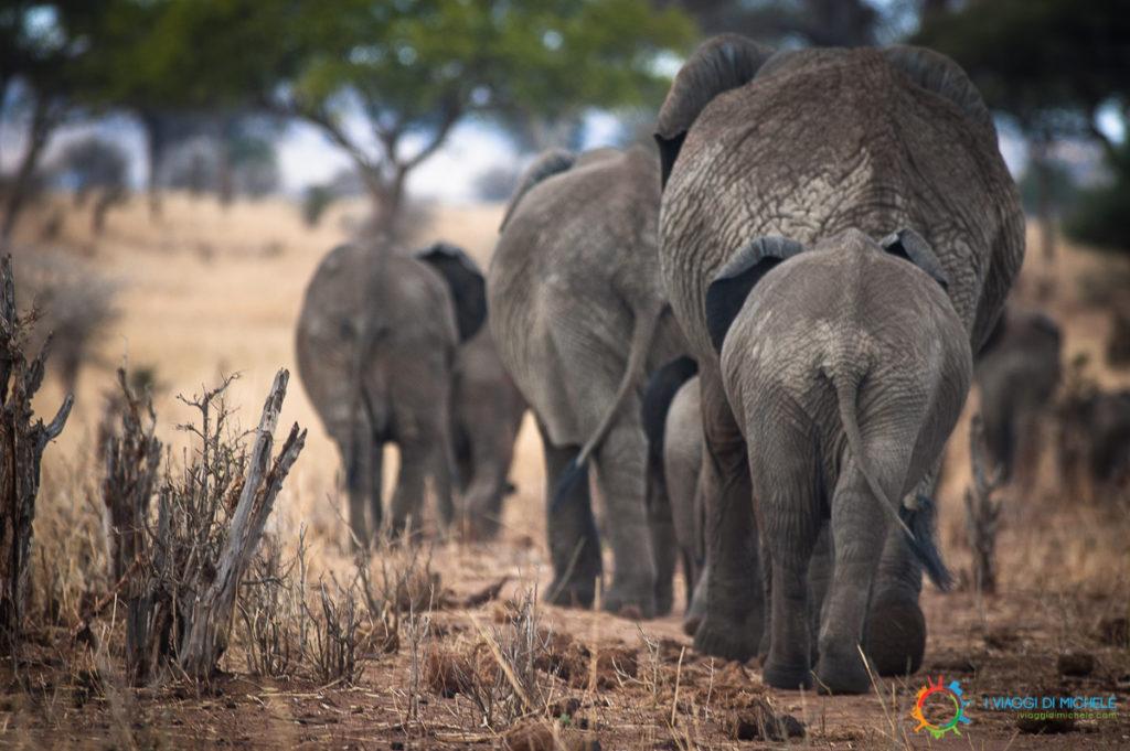 La famiglia di Elefanti che si ricompone dopo il nostro incontro