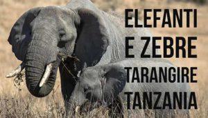 Tarangire National Park, Zebre ed Elefanti