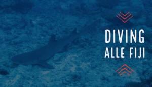 Diving alle Fiji, sulle tracce dello squalo grigio