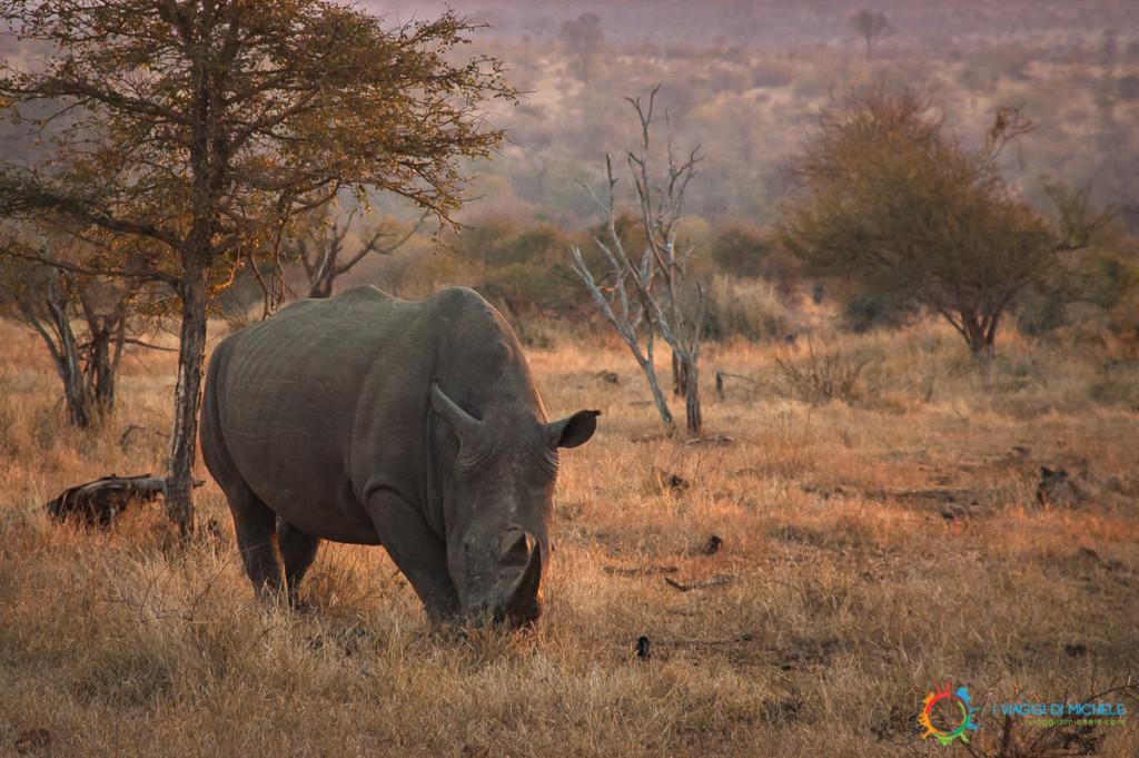 Rinoceronte al tramonto nel Kruger National Park