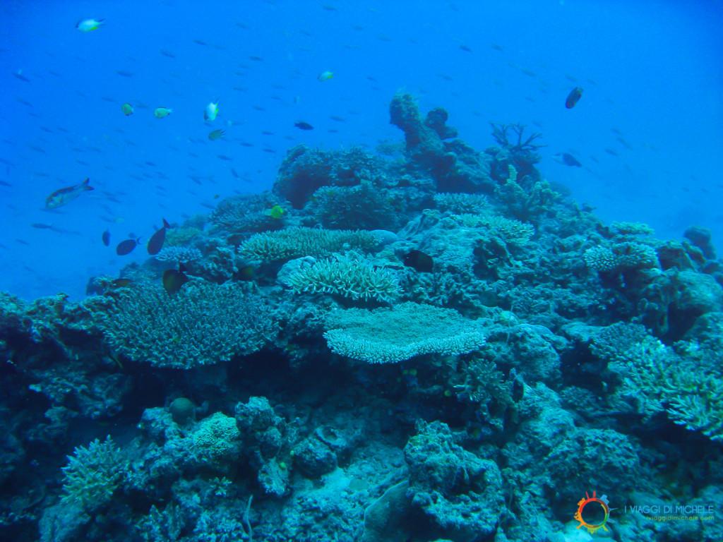 Giardini di corallo