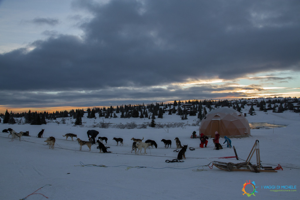 Sjusjoøen - Dog Sledding - La Partenza