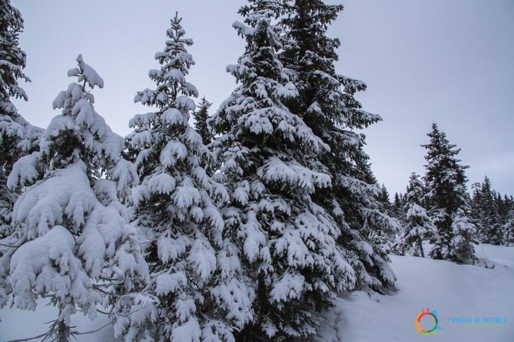 Abeti carichi di neve