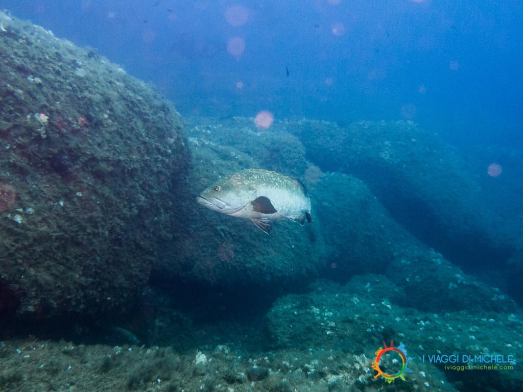 Fotografia subacquea - Soggetto distante con flash azionato