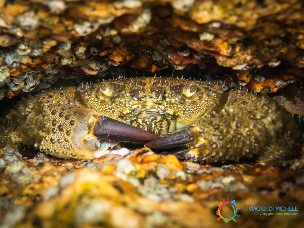 Fotografia subacquea - Ripresa ravvicinata su un granchio