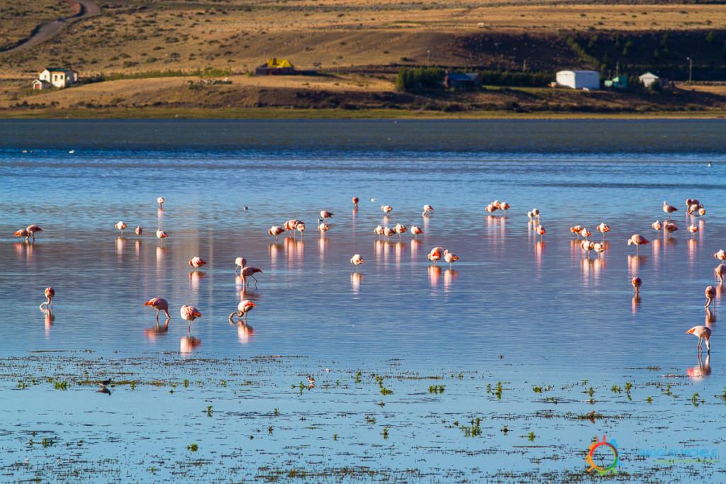 Los Glaciares Sud - Laguna Nimez ed i Fenicotteri Rosa