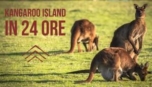 Kangaroo Island in un giorno