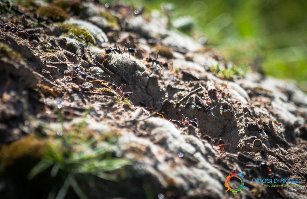 Kangaroo Island in un giorno - Formiche Bulldog