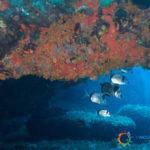 Diving Spargi - Saraghi