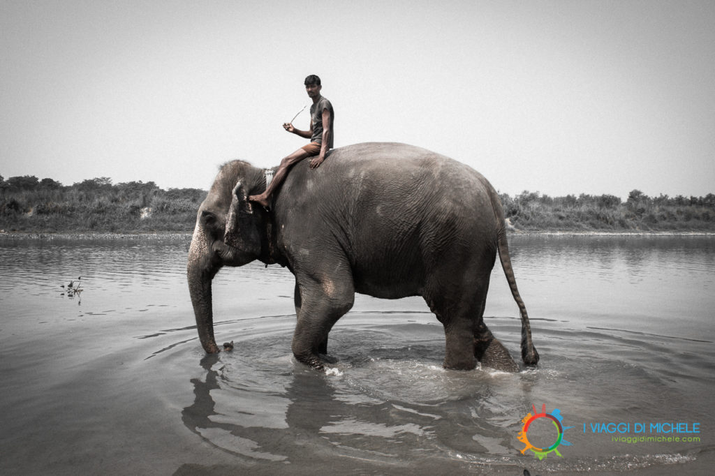 Il bagno dell'elefante - Chitwan National Park
