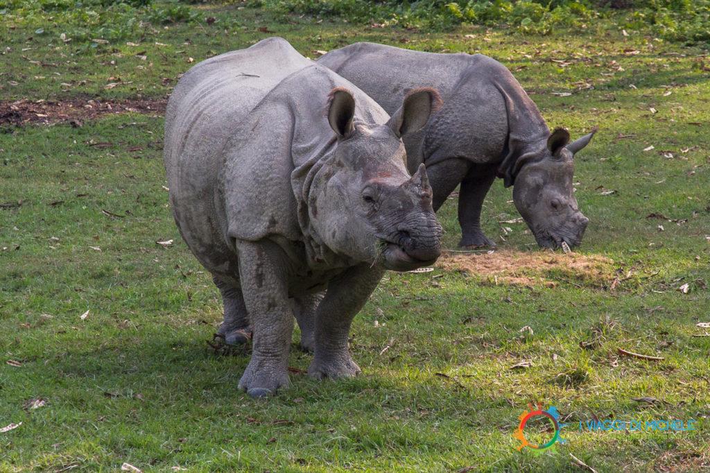 I rinoceronti - Chitwan National Park