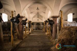 Dove i cavalli vengono preparati e rifocillati al ritorno