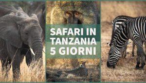 Safari in Tanzania, in 5 giorni