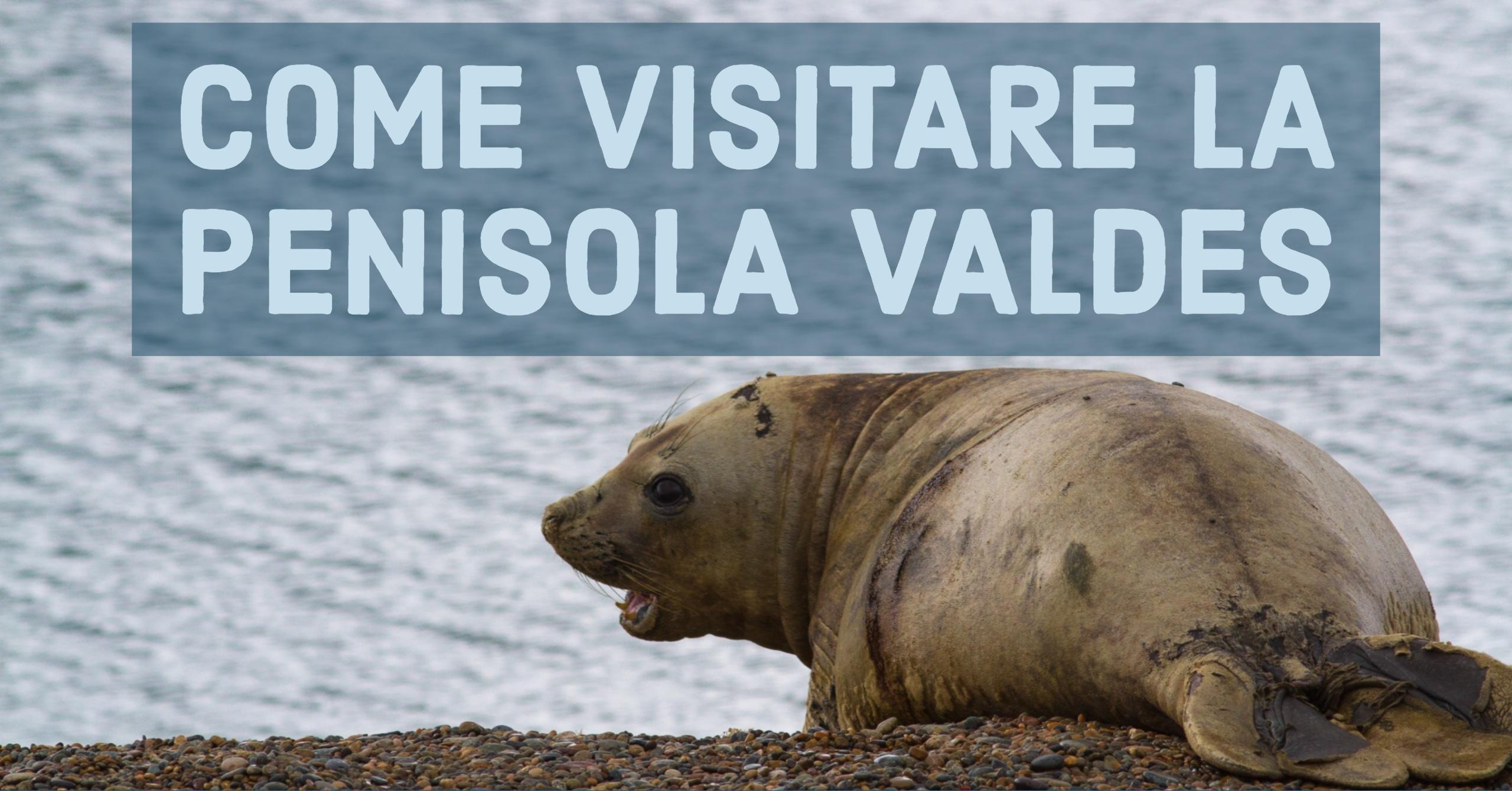 Come visitare la Penisola di Valdes, Patagonia